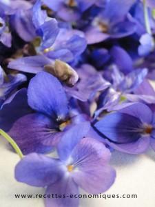 fleurs violettes (1)